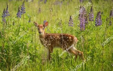 deer-370x232.jpg